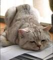 depressed_cat