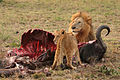 120px-Male_Lion_and_Cub_Chitwa_South_Africa_Luca_Galuzzi_2004_edit1