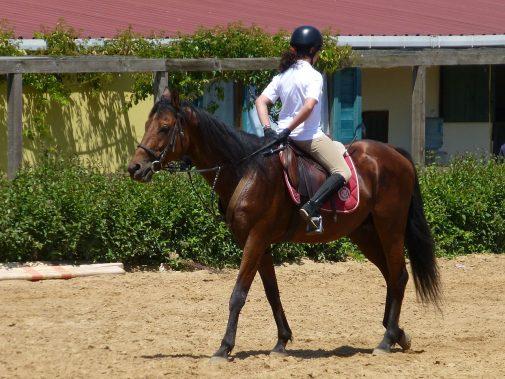 1280px-Riding_a_Horse_Backwards_1110782